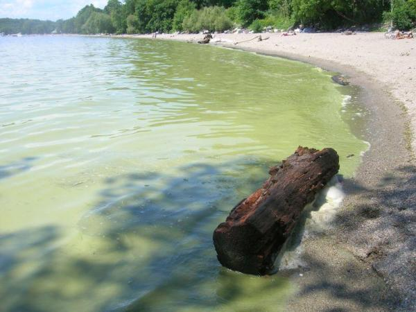 Algae-Bloom-Burlington-VPR