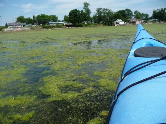 algae-weeds-StAlbans-SAAWA
